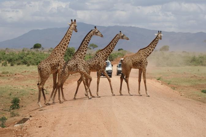 Safari nella Tanzania settentrionale di 7 giorni AFRICA