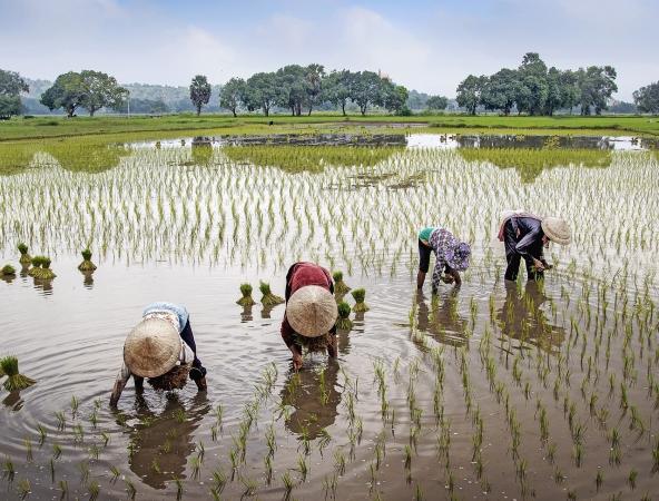 Il Nord del Vietnam ASIA