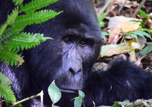 Safari fotografico in Uganda 10 giorni AFRICA