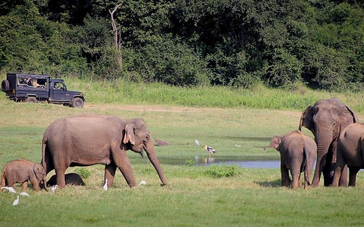 Sri Lanka - Tour esotico dell'isola ASIA