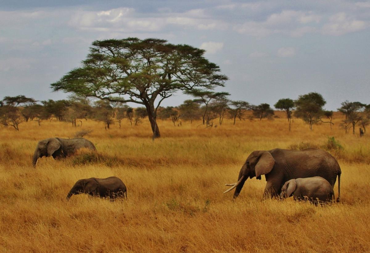 Safari nella Tanzania Settentrionale 5 giorni