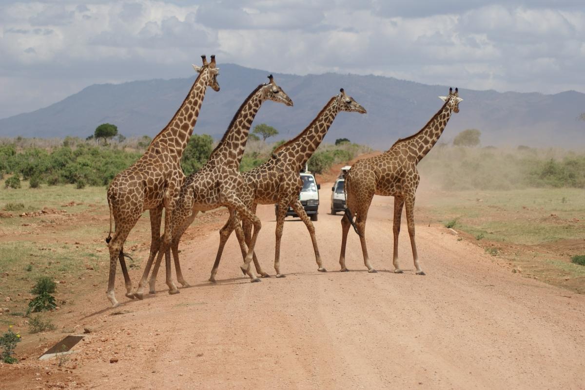 Safari nella Tanzania settentrionale di 7 giorni