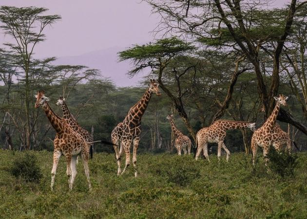 Safari nella Tanzania settentrionale di 9 giorni AFRICA