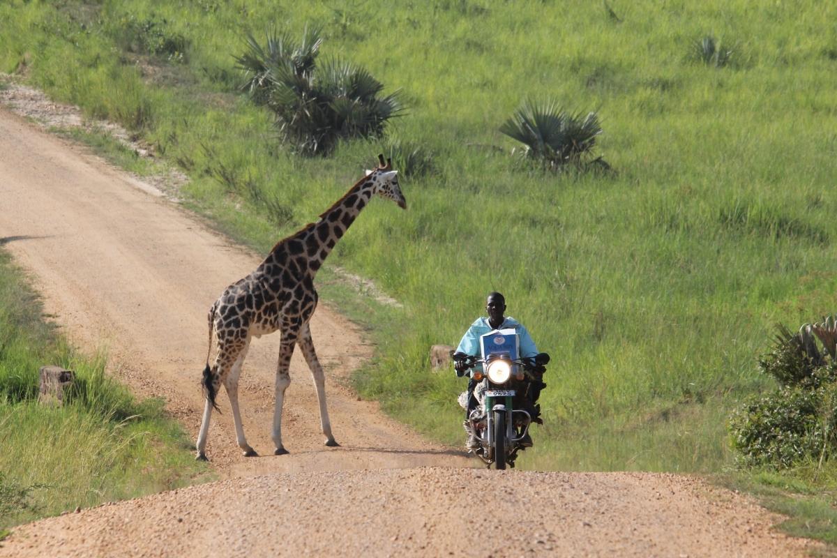 Safari fotografico in Uganda 7 giorni