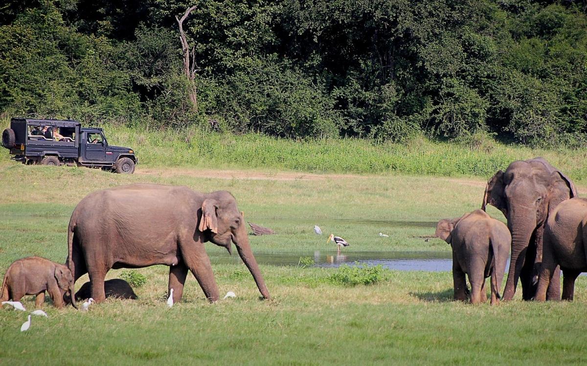 Sri Lanka - Tour esotico dell'isola