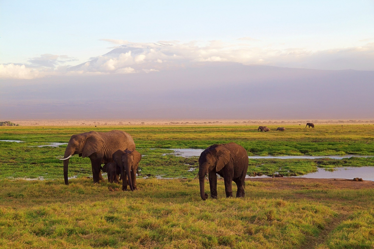 Kenia safari 4 giorni