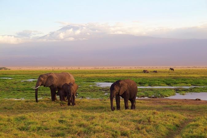 Kenia safari 4 giorni AFRICA