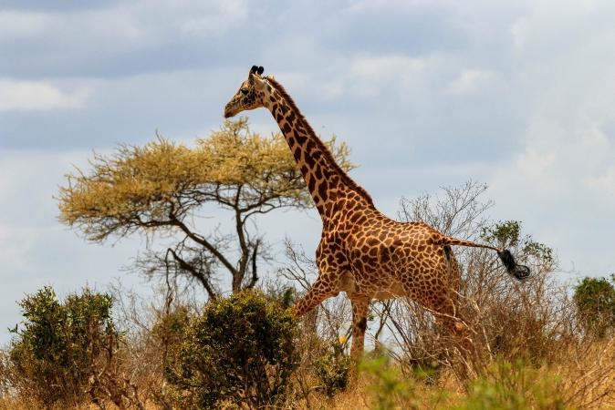 Kenia - Safari nei parchi Nakuru Amboseli Masai Mara AFRICA