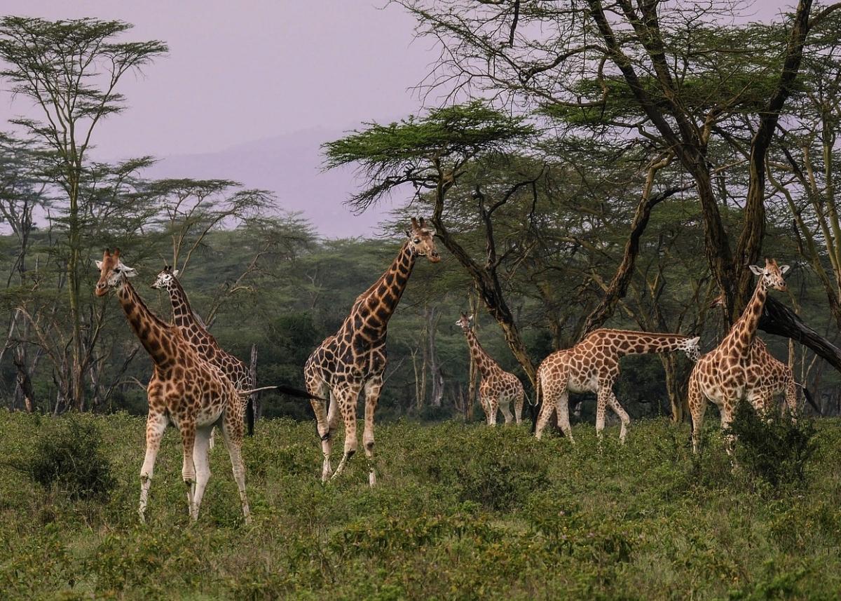 Safari Parchi del Kenia e spiaggia di Mombasa